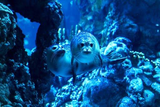 Acquario di Genova foche